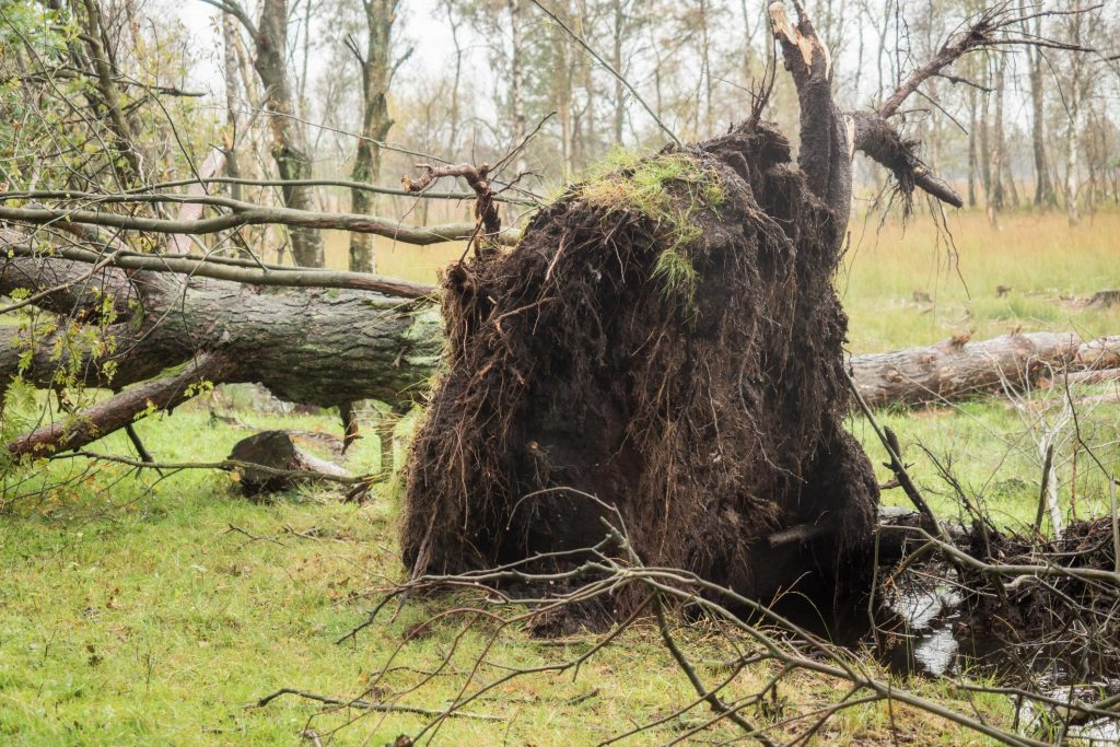 Norwalk Tree Service Pros - Storm Clean Up 1
