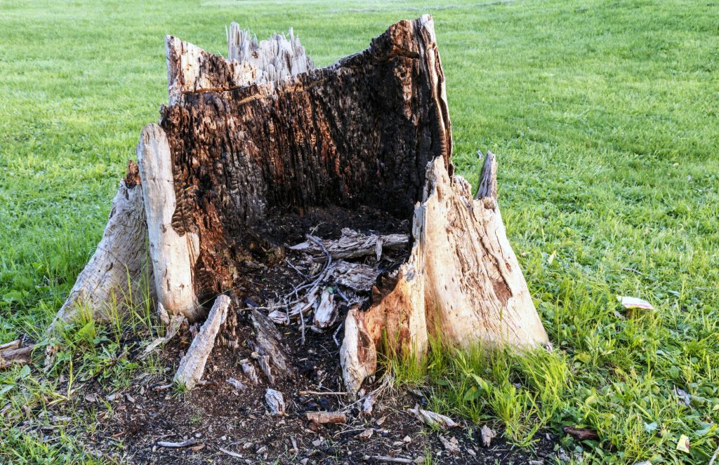 Norwalk Tree Service Pros - Stump Removal 1