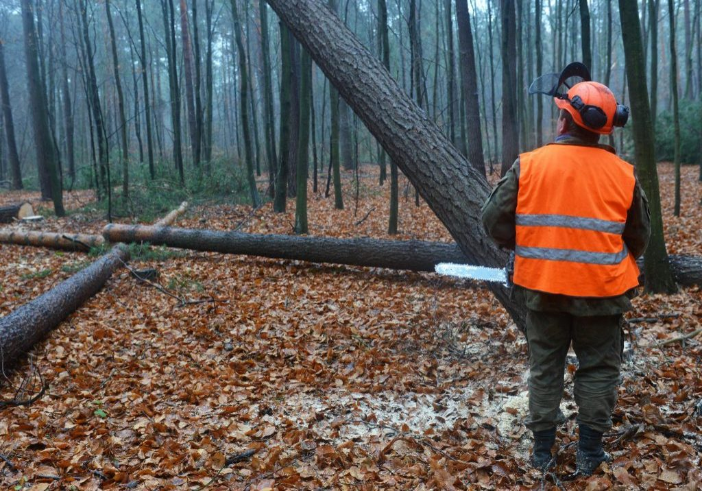 Norwalk Tree Service Pros - Land Clearing 1