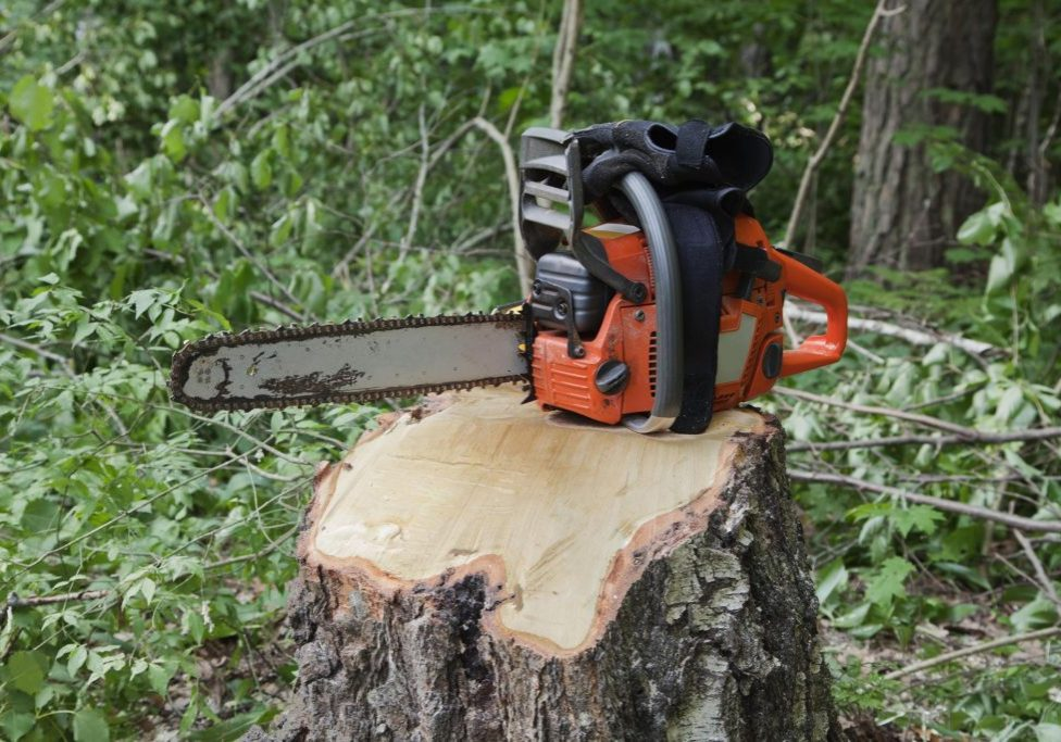 Norwalk Tree Service Pros - Stump Grinding 1