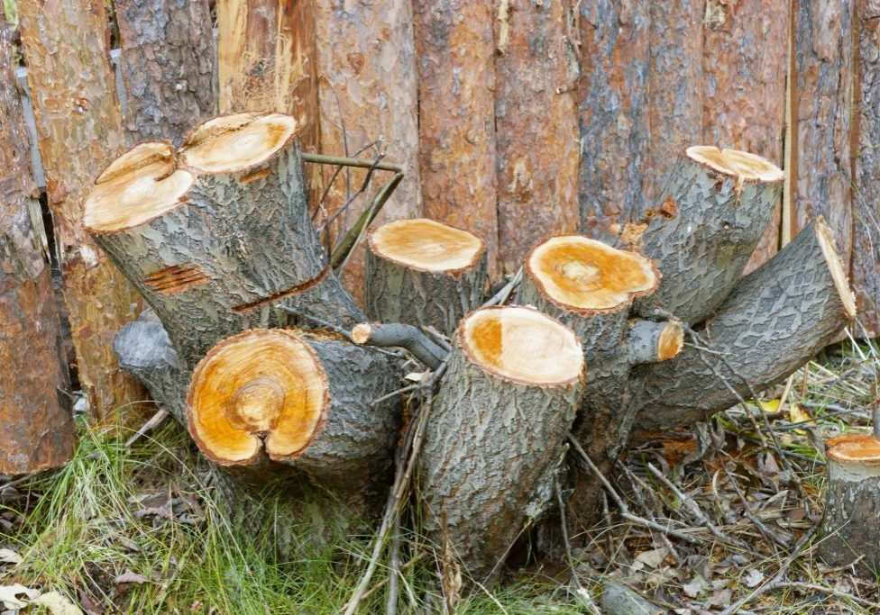 Norwalk Tree Service Pros - Stump Grinding 2